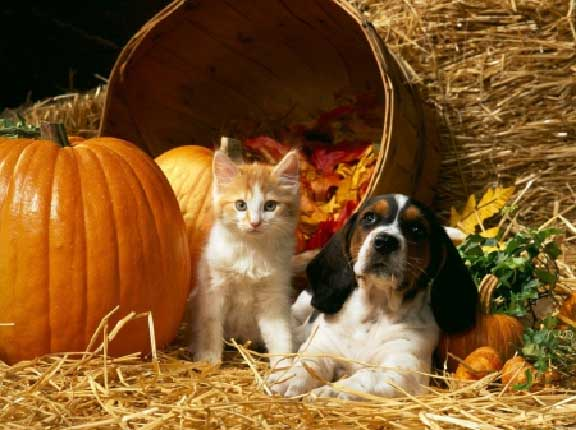 October is Adopt a Pet Month