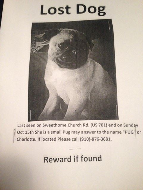 lost-pug-from-sweethome-church-road-in-elizabethtown