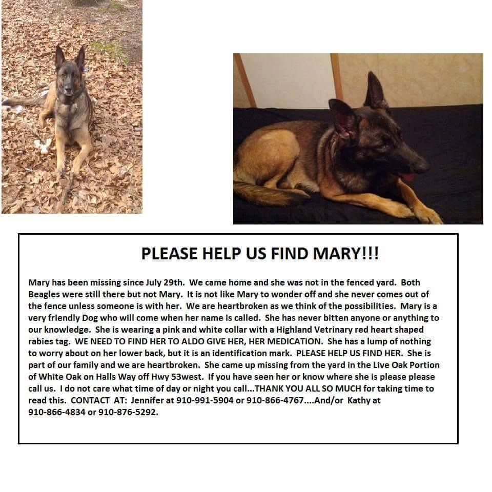 Missing dog in White Oak